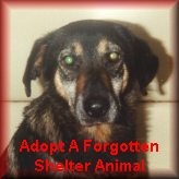 Adopt A Forgotten Shelter Animal
